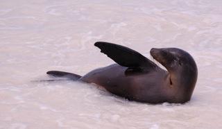Galapagos 2010 1049