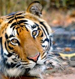 Indien 2012 Ingvar 885 kopiera kopiera